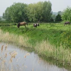 2014-05-01 exteriieur ferme ane poney cheval