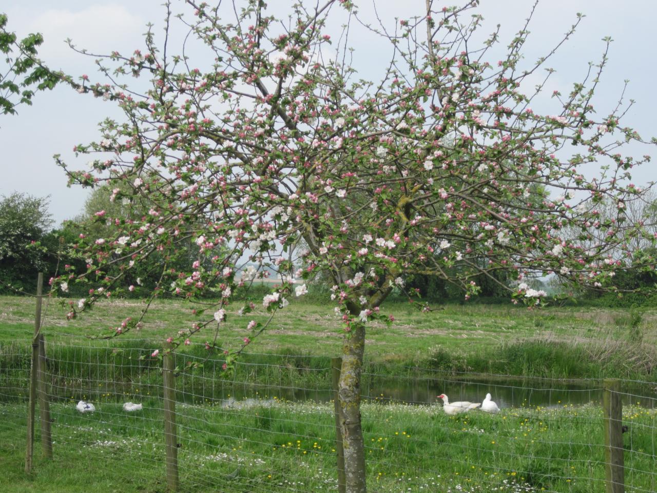 2014-05-01 exteriieur ferme canard