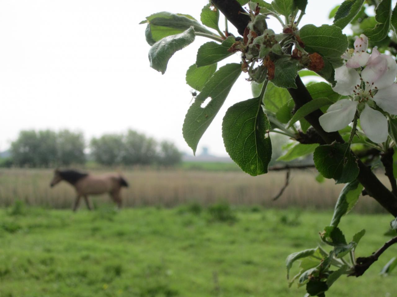 2014-05-01 exteriieur ferme cheval ane poney