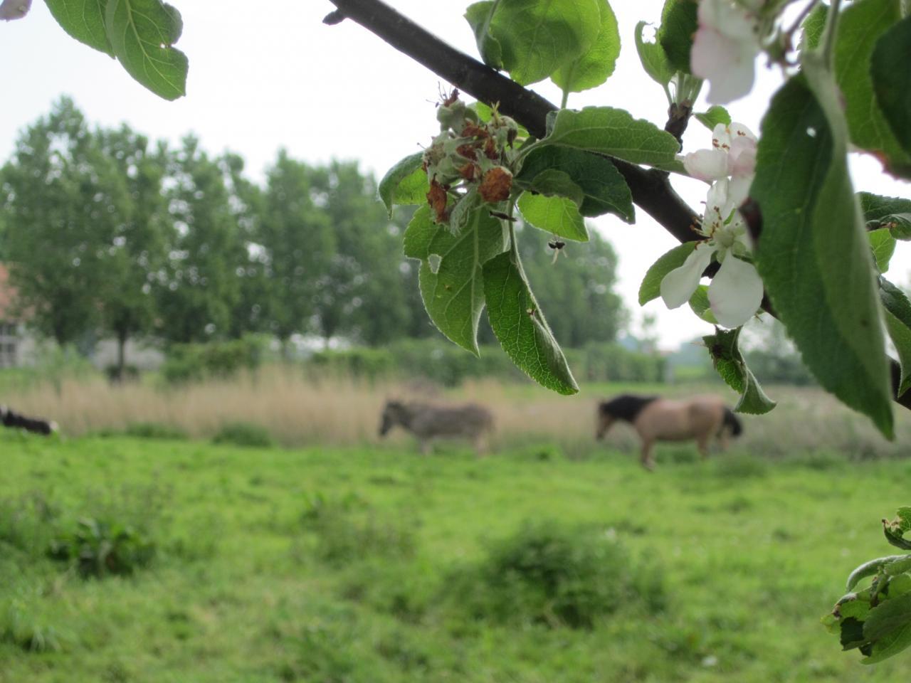 2014-05-01 exteriieur ferme cheaval ane poney