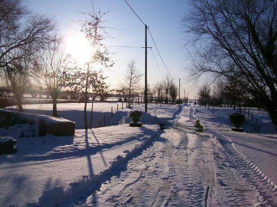 allée hiver